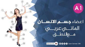اعضاء جسم الانسان – الماني عربي مع النطق