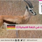 اسماء الحيوانات باللغة الالمانية مع النطق
