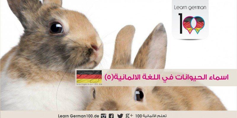 اسماء الحيوانات في اللغة الالمانية (5)- الارنب